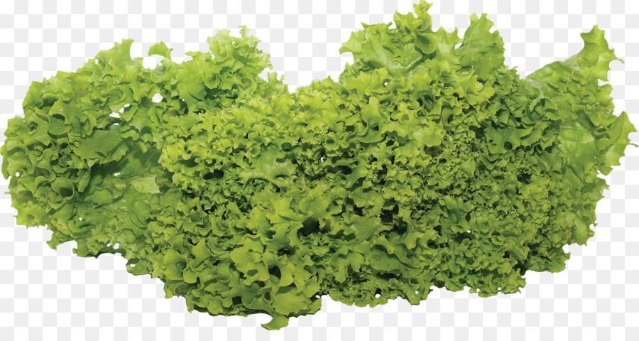 Vegetables Cartoon clipart - Salad, Lettuce, transparent