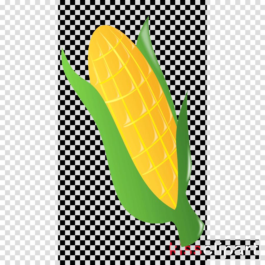 Clip art clipart Corn on the cob Clip art