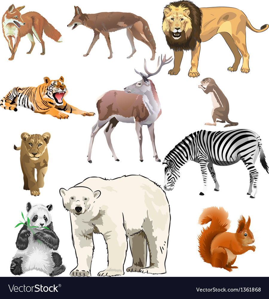 download wild animals clipart clip art | animal, lion, cat clipart
