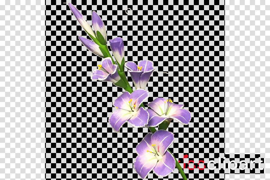 gladiolus flower transparent clipart Gladiolus Clip art