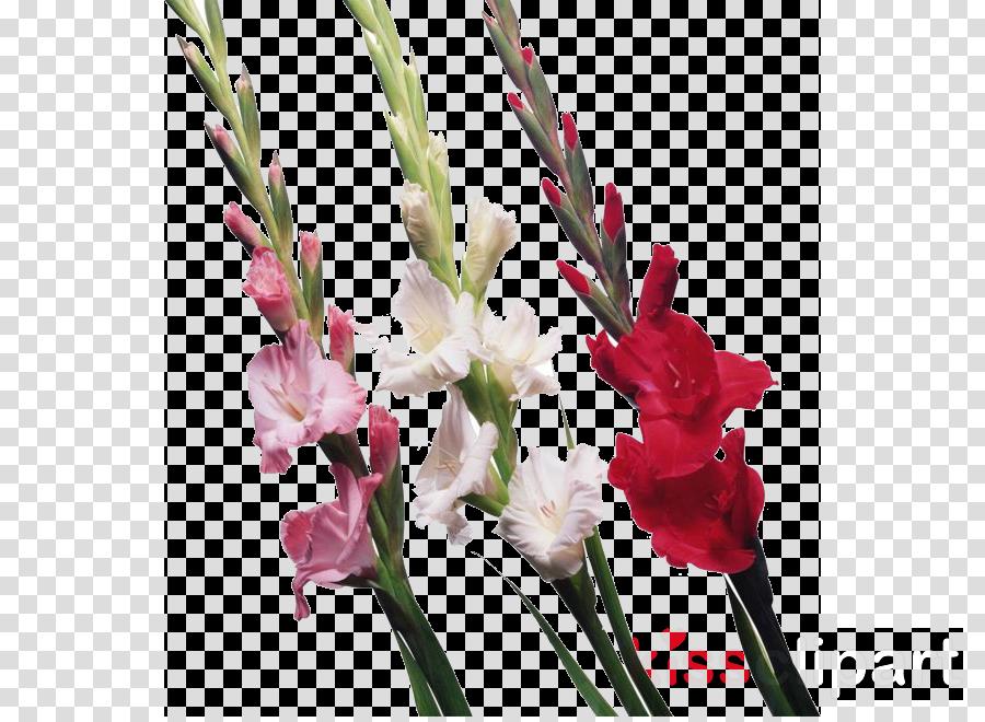 cut gladiolus clipart Cut flowers The Gladiolus
