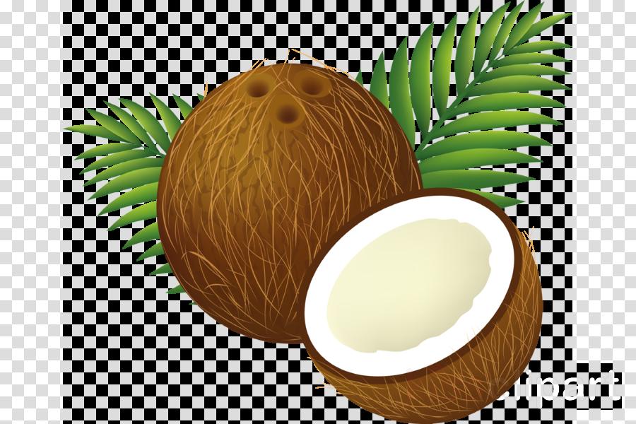 coconut clipart Coconut water Clip art