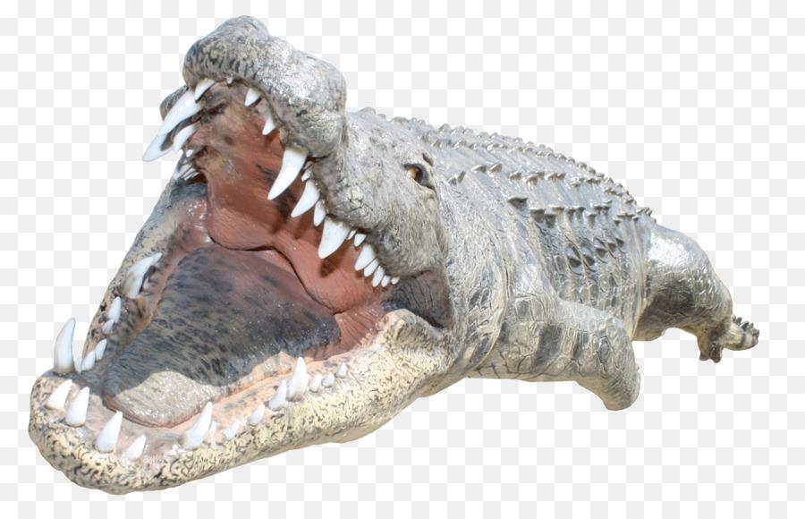 Alligator Cartoon