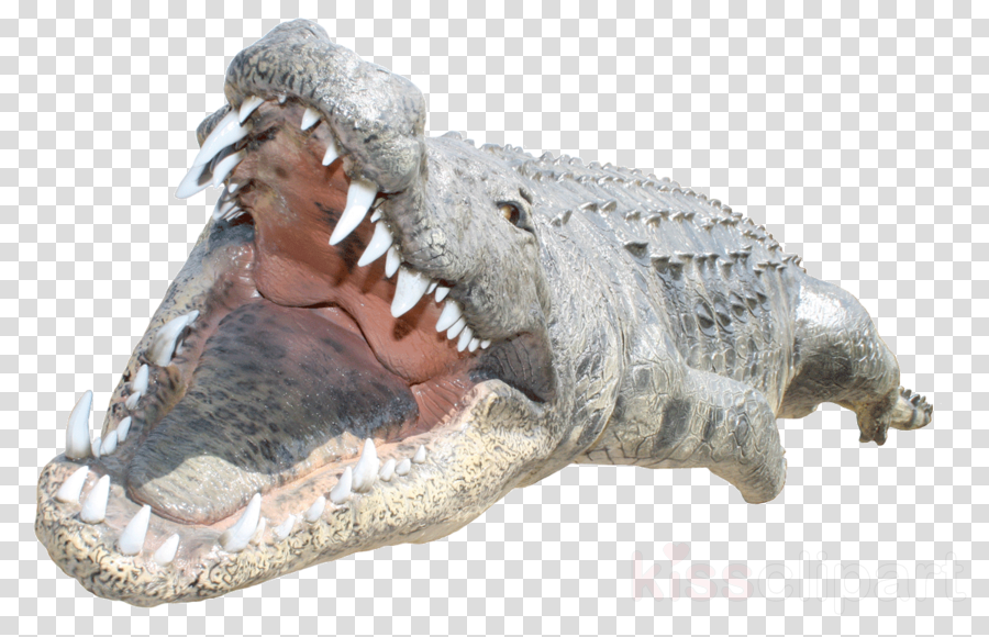 transparent background alligator png clipart Crocodiles