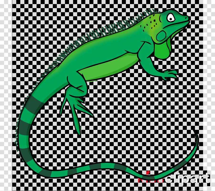 iguana clip art clipart Lizard Green iguana Clip art