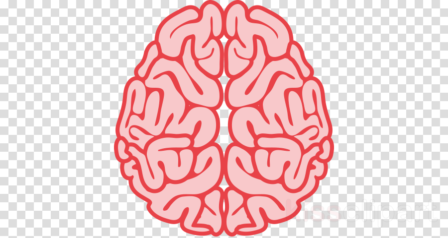 brain infographic png clipart Infographic Brain