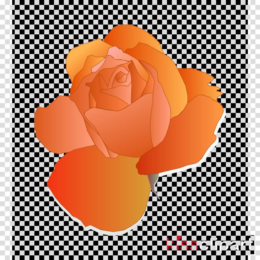 orange rose clipart Garden roses Clip art