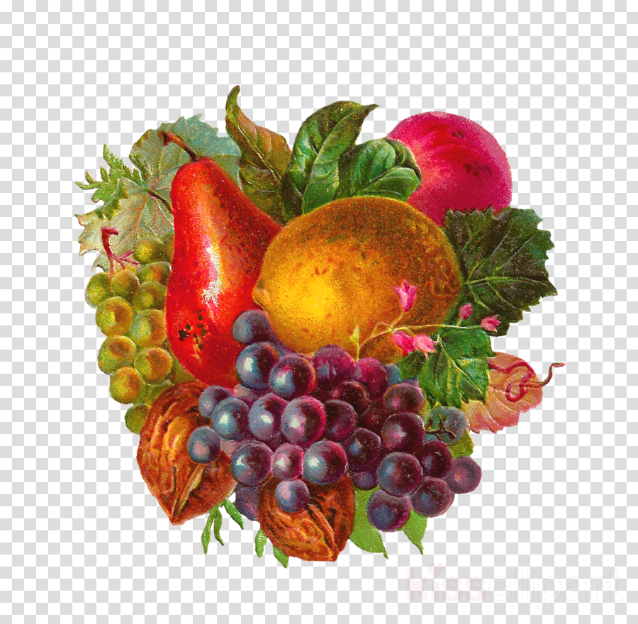 vintage fruits png clipart Fruit Common Grape Vine Clip art