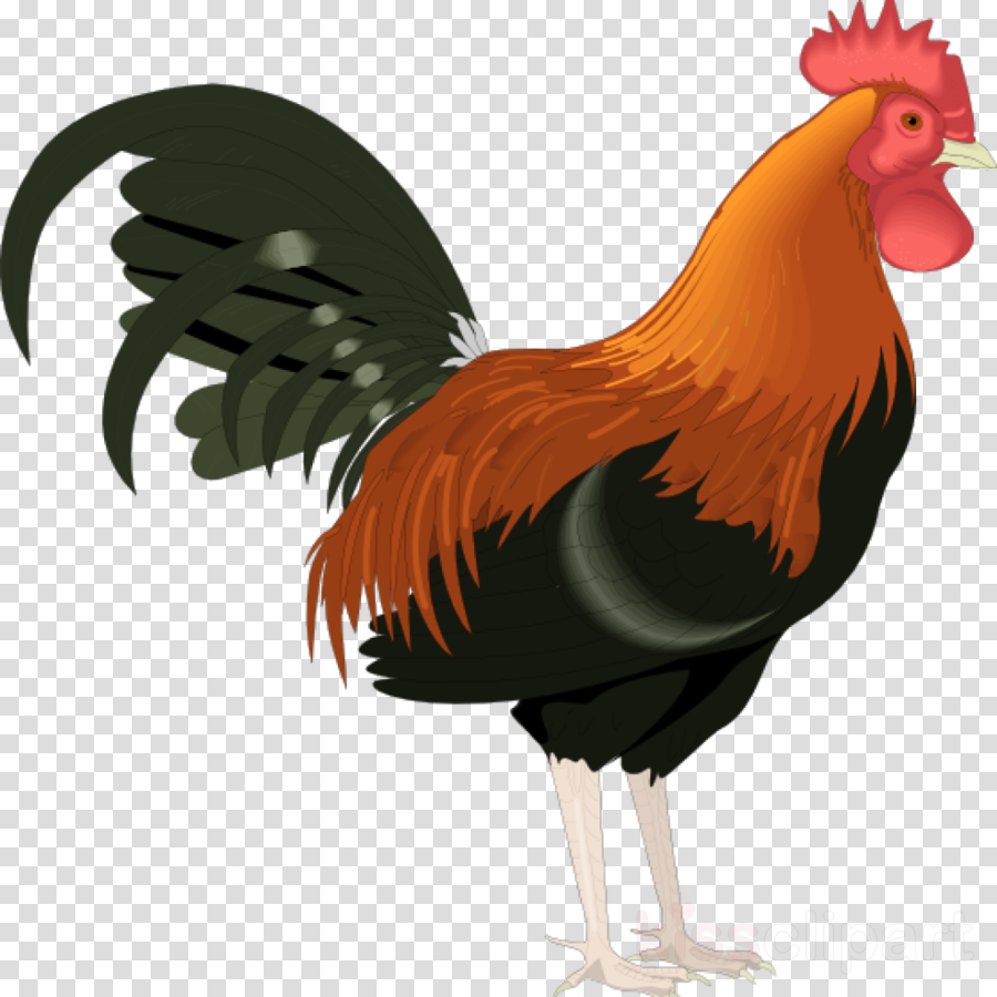 rooster clipart Rooster Clip art