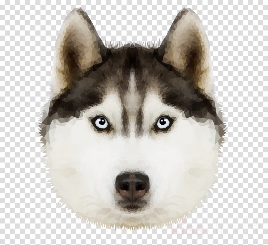 3drose ht_11326_1 siberian husky-iron on heat transfer, 8 by 8