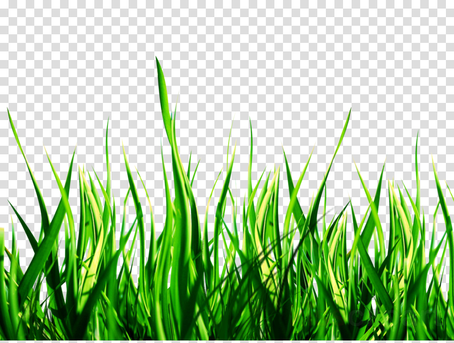 Grass Sky Transparent Png Image Clipart Free Download