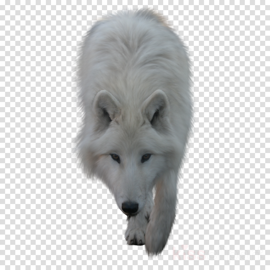 wolf psd clipart Dog Arctic wolf Coyote