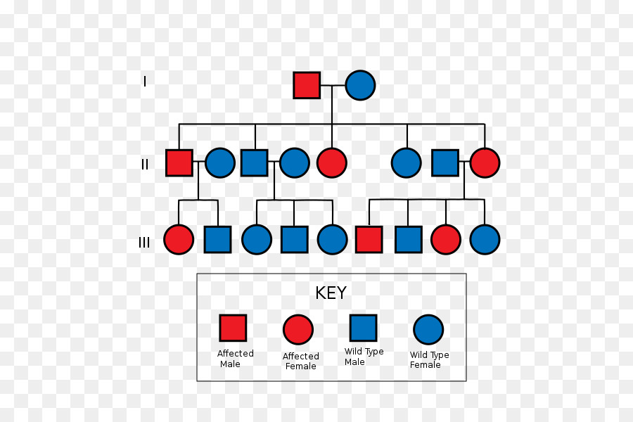 pedigree chart clipart Pedigree chart Diagram Genetics