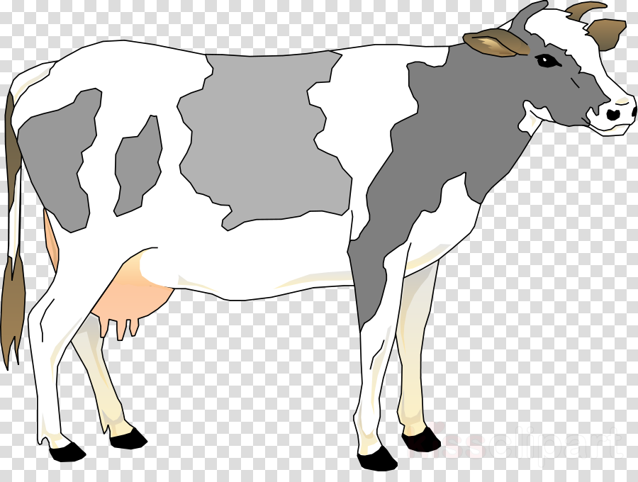 grey cow clipart Murray Grey cattle Hungarian Grey Clip art