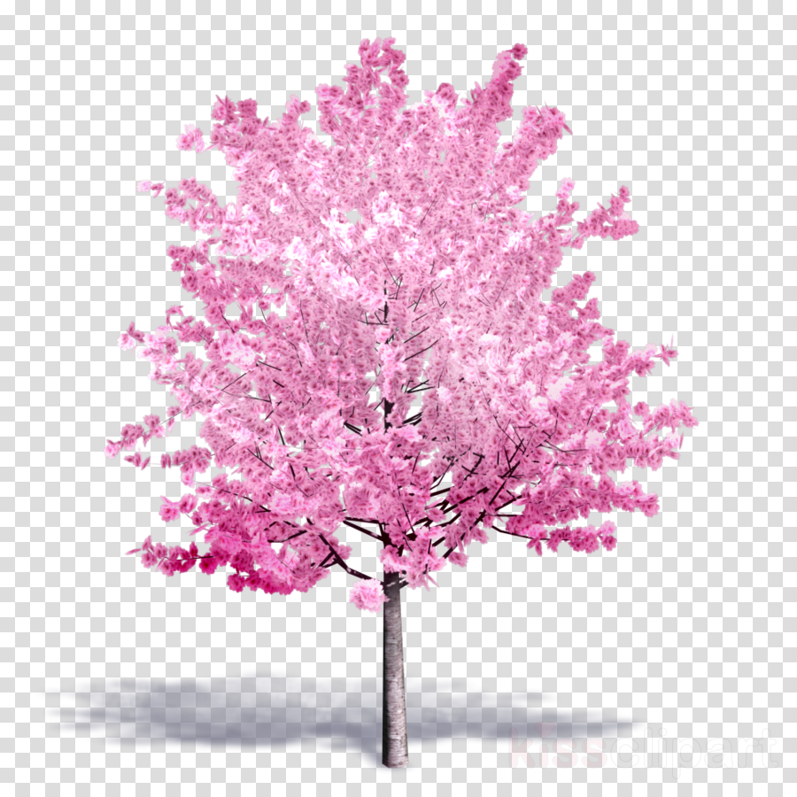 archicad tree png clipart Autodesk Revit Cherry blossom Building information modeling
