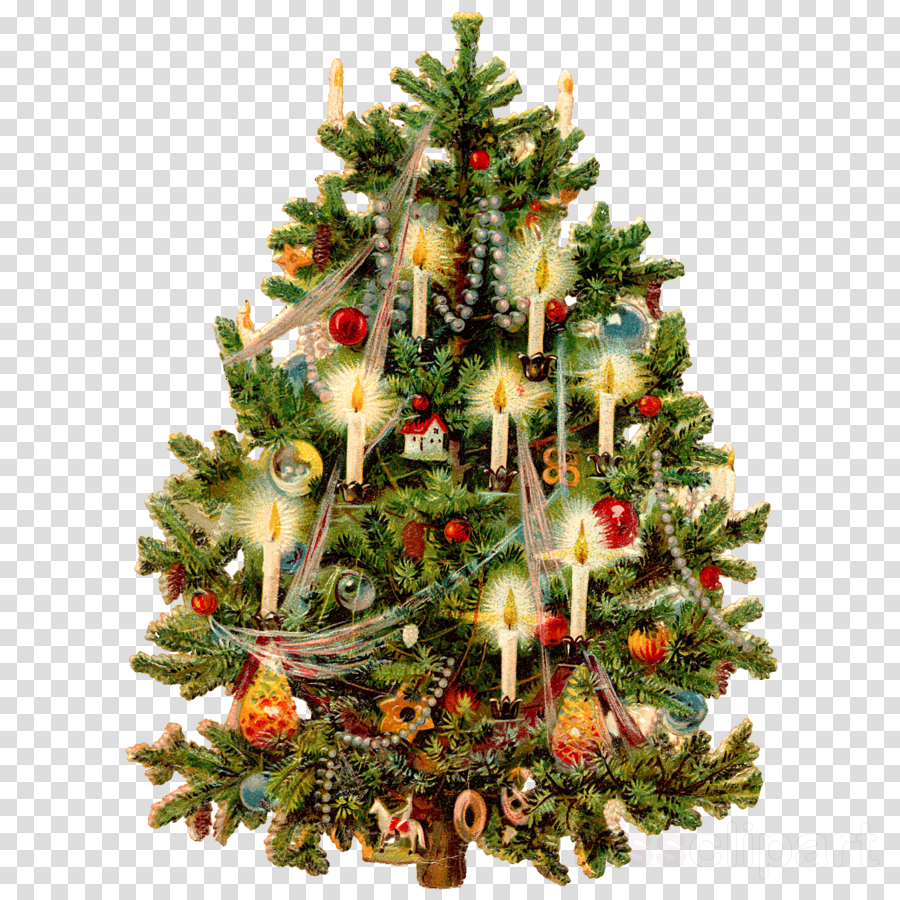 Tree Christmas Transparent Png Image Clipart Free Download