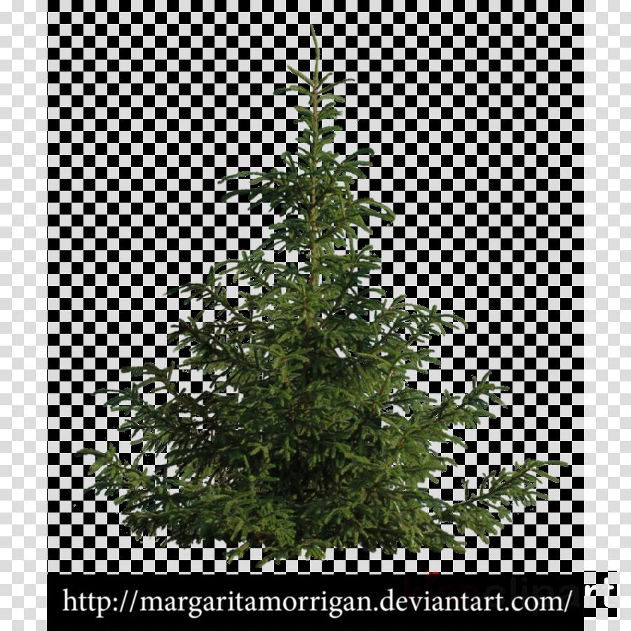 Tree clipart Spruce Fir Tree