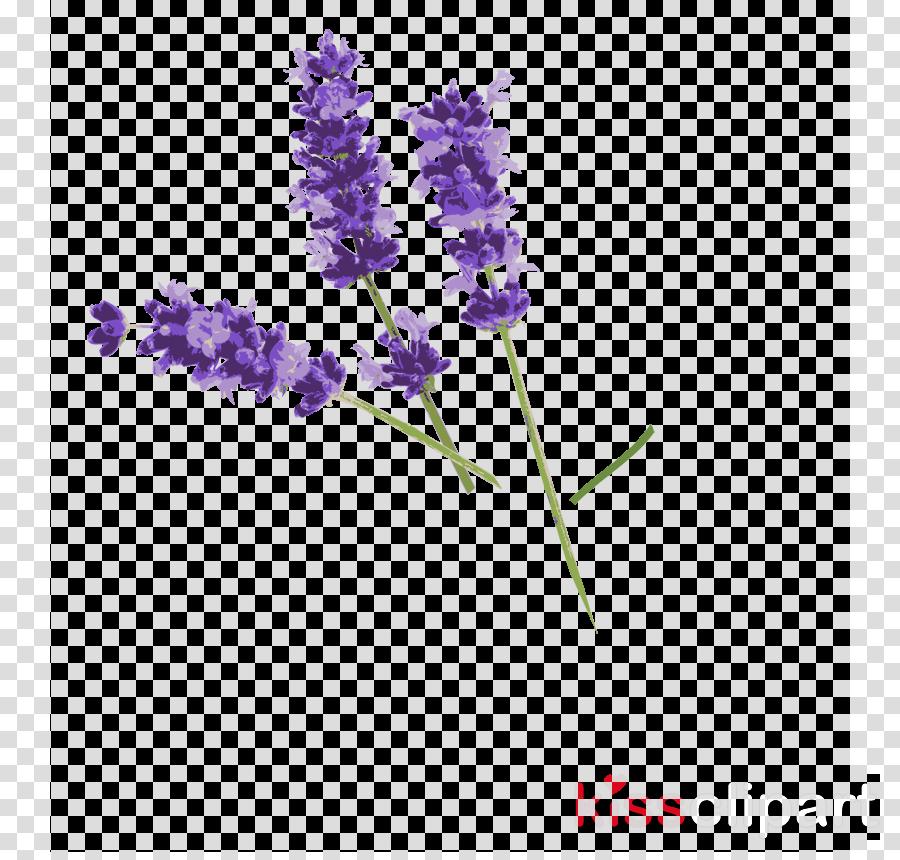 cleo herbal lavande éclaircissant des masques de beauté (5) clipart English lavender Herb Lavandula latifolia