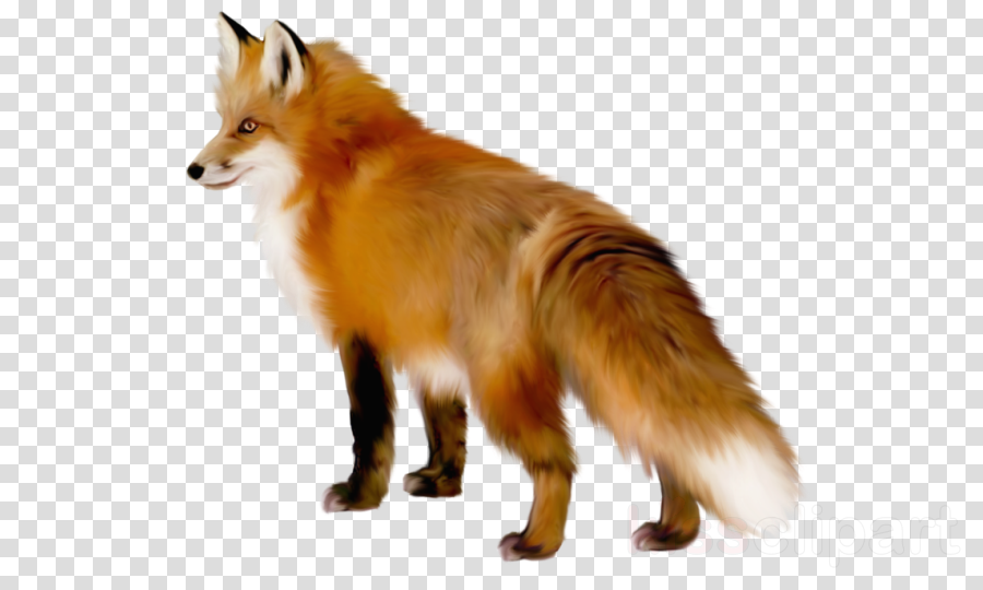 transparent fox clipart Red fox Clip art