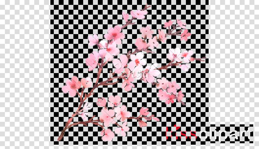 cherry blossom transparent clipart Cherry blossom Clip art