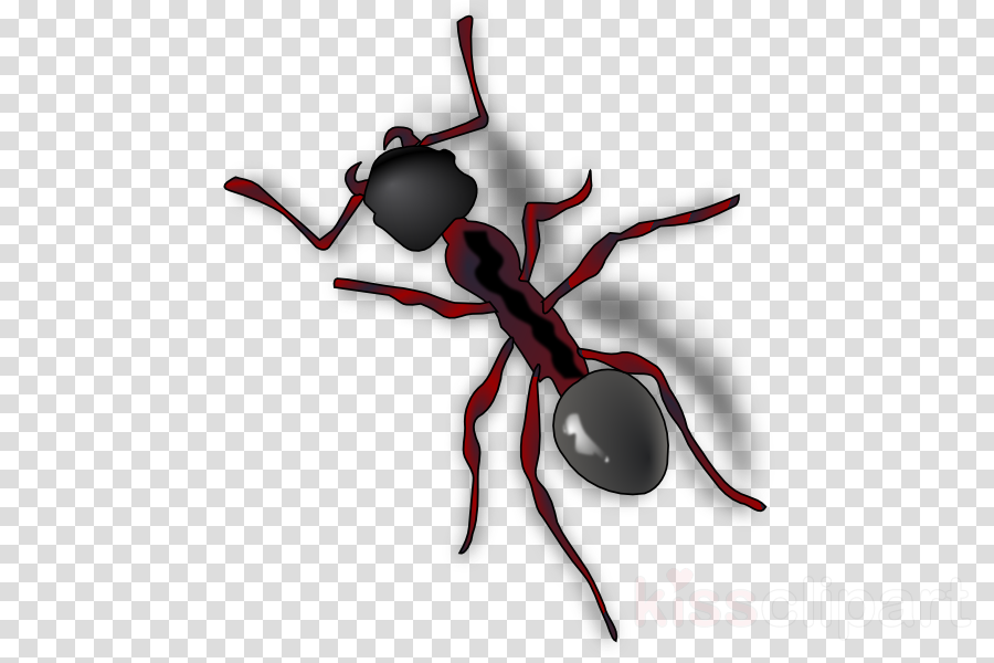 ant gif png clipart Ant Insect Clip art