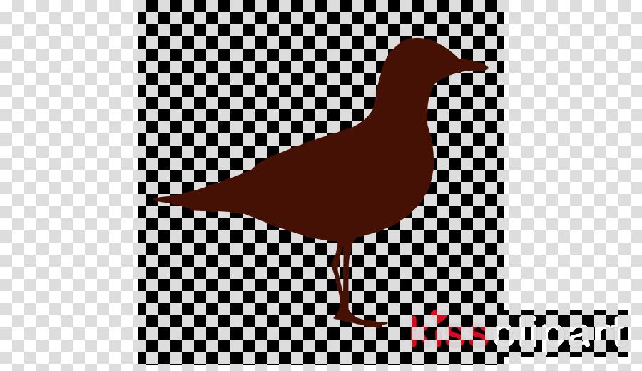 Gulls clipart Gulls Bird Duck