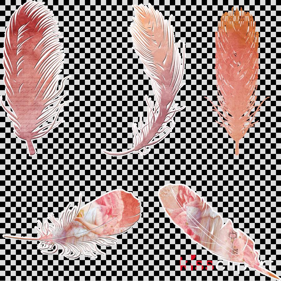 bohemian feathers transparent clipart Feather Bohemianism Clip art
