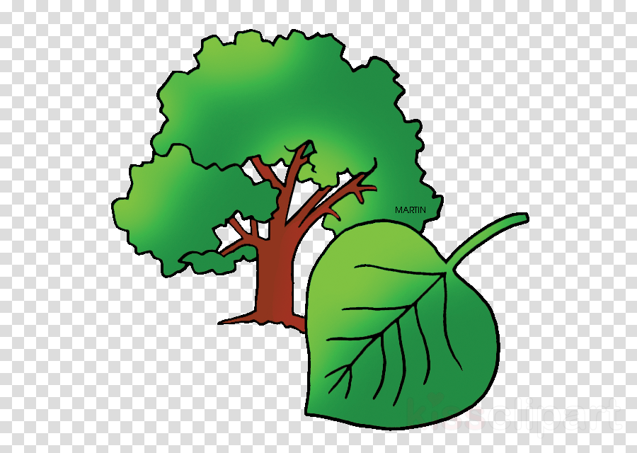 draw populus sect aigeiros clipart Tree Populus sect. Aigeiros Clip art