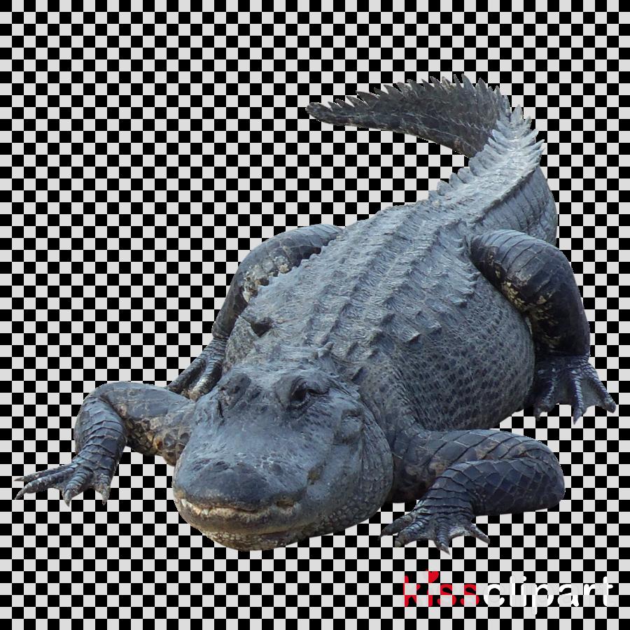 alligator png clipart Alligators Crocodile