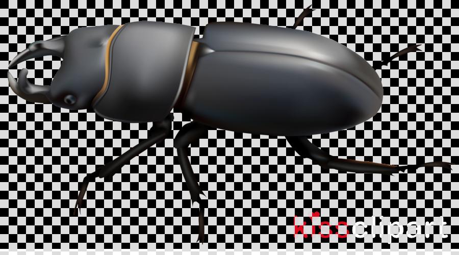 beetle clipart Beetle Scarabs Clip art