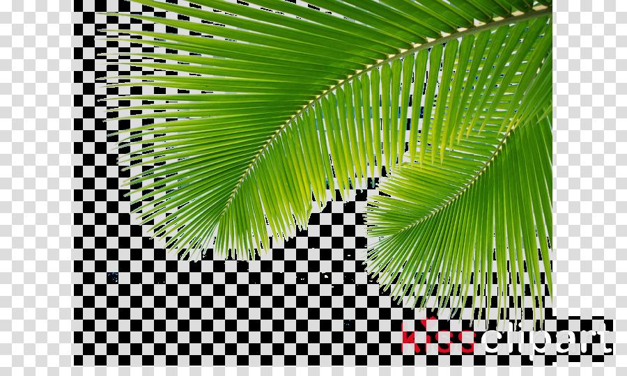 palms from palm sunday clipart Palm trees Palm Sunday Palm branch