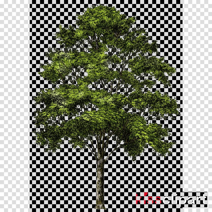 tree png transparent background clipart Clip art