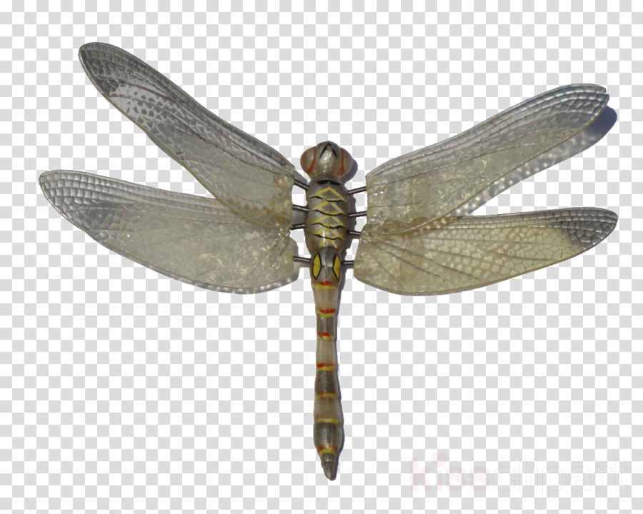 Download Dragonfly Png Clipart Insect Dragonfly Wings