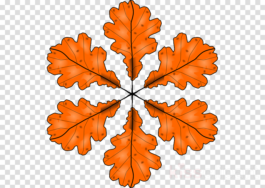 Autumn clipart Autumn leaf color Clip art