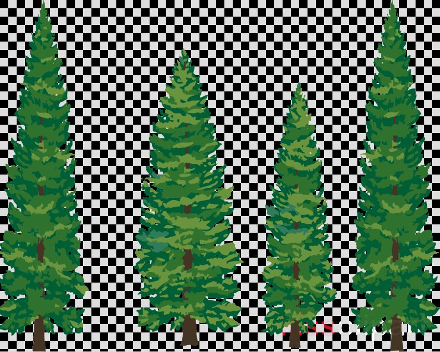 drawn pine tree clipart Fir Lodgepole pine Drawing
