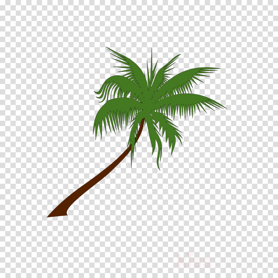 Coconut Tree Leaf Transparent Png Image Clipart Free Download