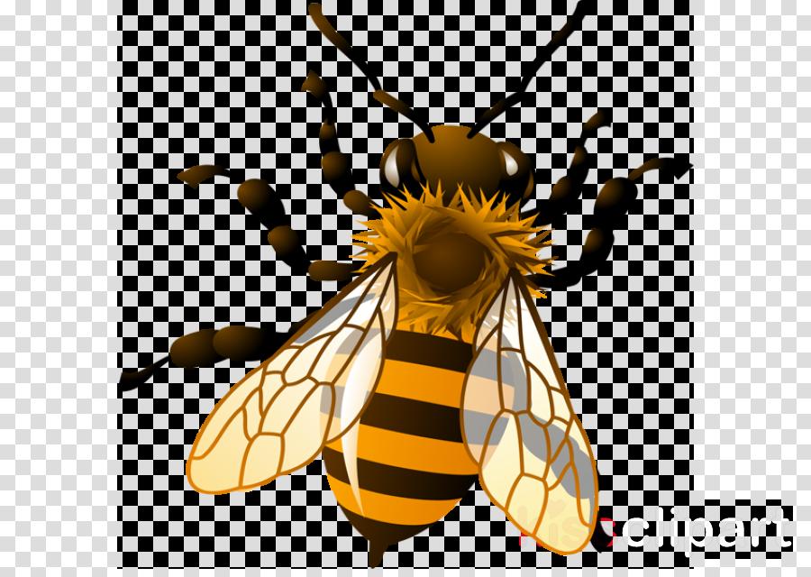 beyond buzzwords by michelle bassett & temitayo osinubi clipart Honey bee Clip art
