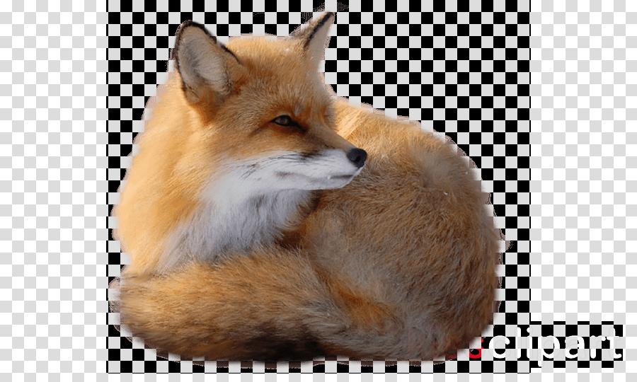 fox transparent clipart Red fox Clip art