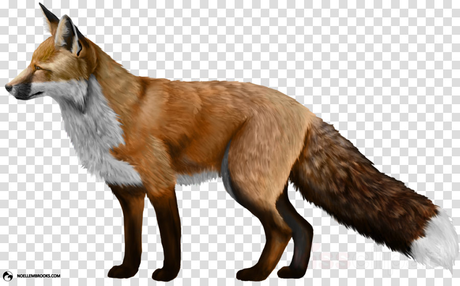 fox png clipart Red fox