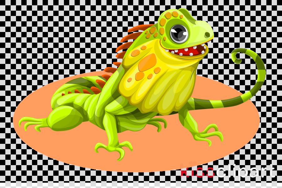 iguana png clipart Lizard Reptile Green iguana