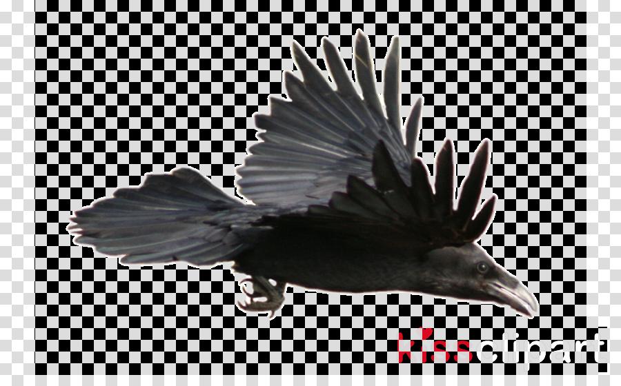 raven png clipart Common raven Clip art