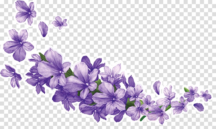 lavender flower png clipart English lavender Clip art