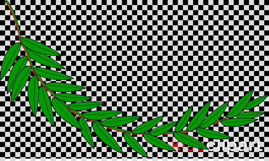la rama de laurel clipart Bay laurel Laurel wreath Clip art
