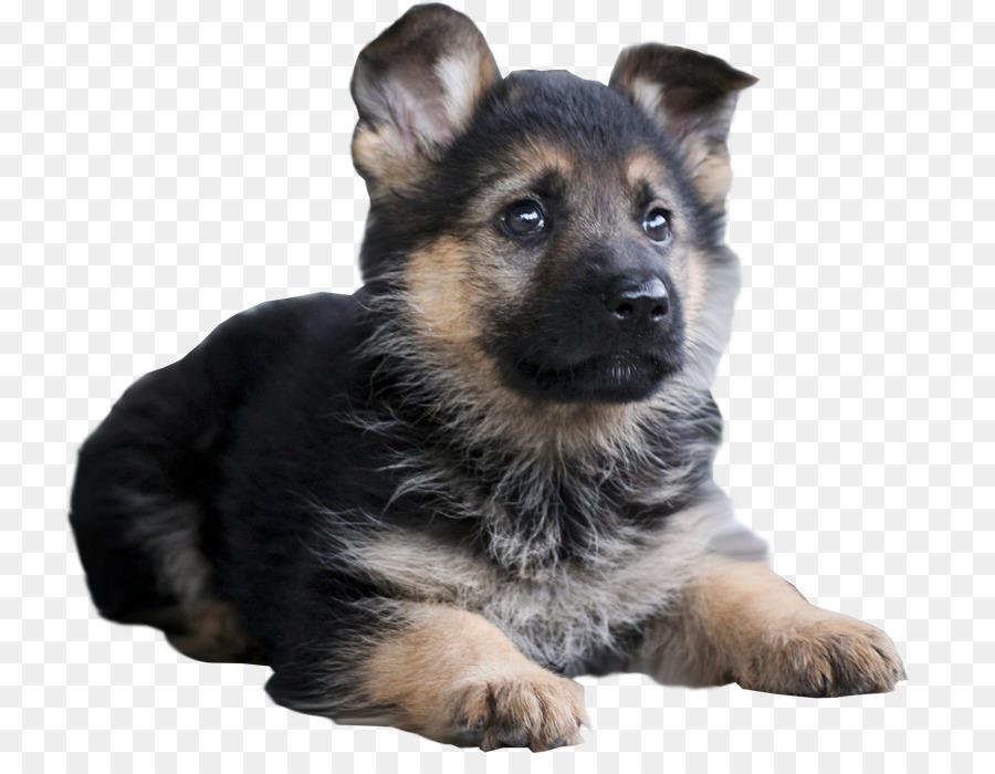 german shepherd mix puppies for sale lancaster puppies - 900×700