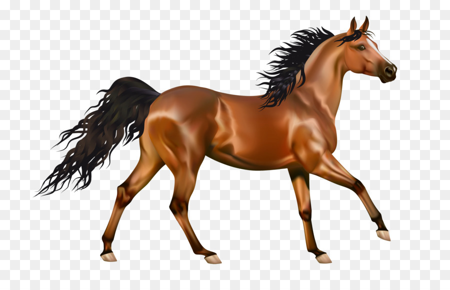 high resolution horse clipart Pony Foal Arabian horse