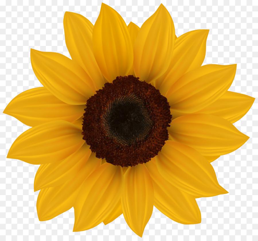 Family Cartoon clipart - Flower, Sunflower, transparent ...