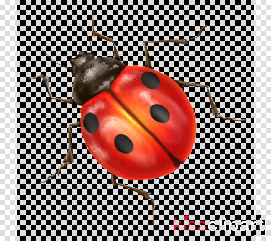 lady bug transparent clipart Ladybird beetle Clip art