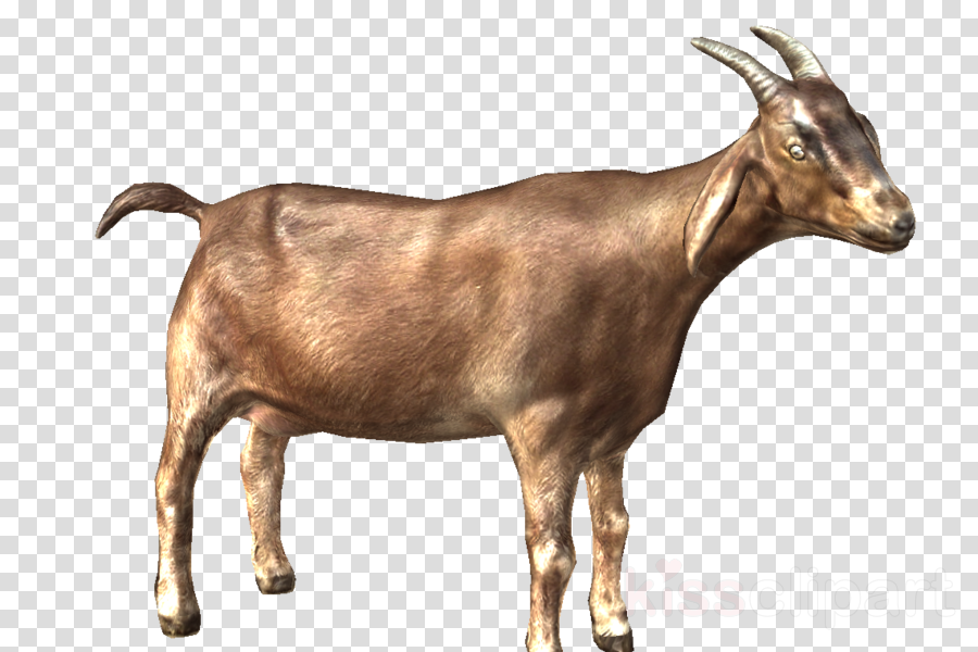Goat clipart Nigerian Dwarf goat Oberhasli goat Cattle