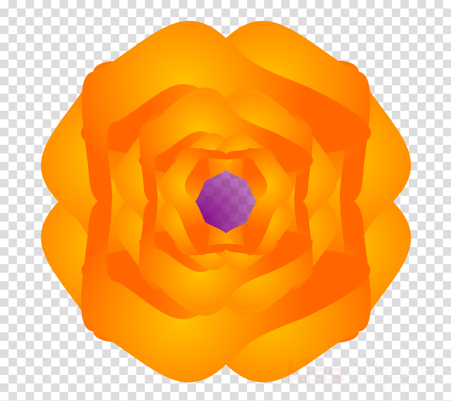 orange clipart Rose Flower Petal