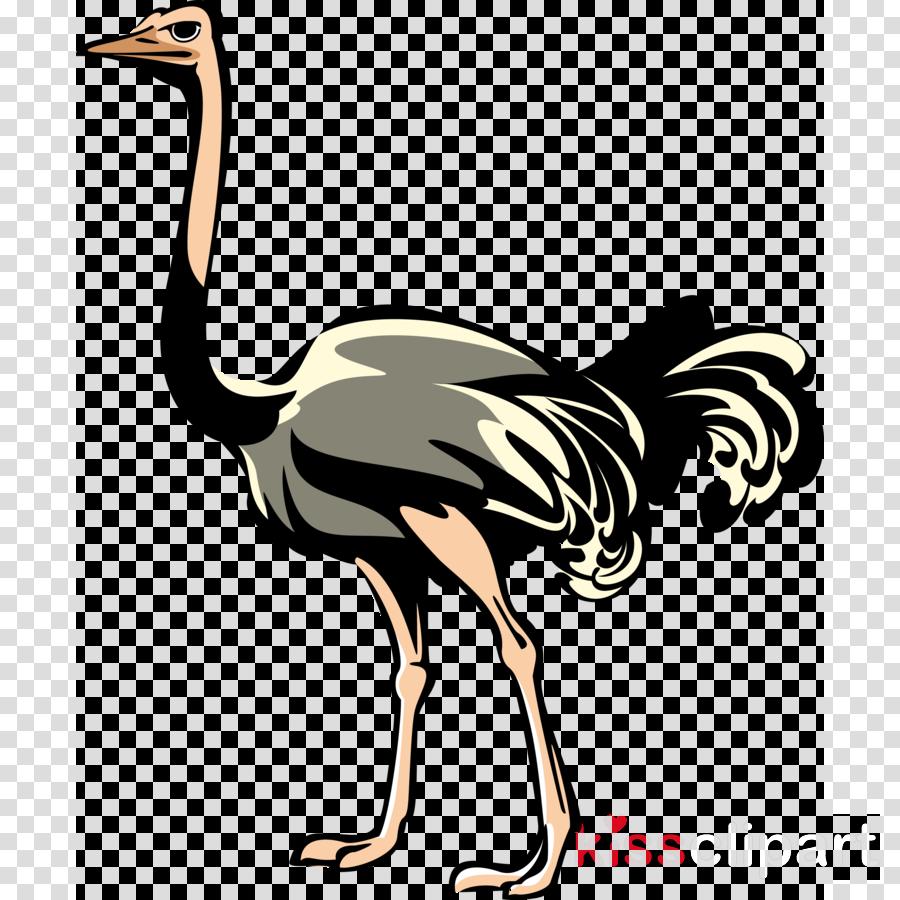 ostrich png clipart Common ostrich Clip art